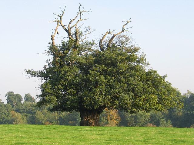 summer-tree-1000470_640